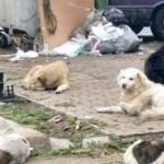 PUCIOASA: Pe 20 februarie începe ridicarea de pe străzi a câinilor fără stăpân