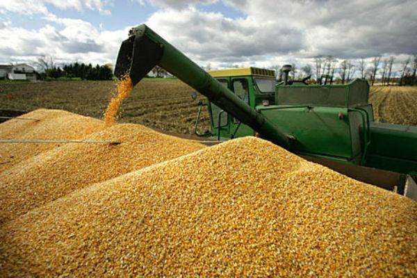 Mai mult porumb și cereale păioase pe ogoarele dâmbovițenilor