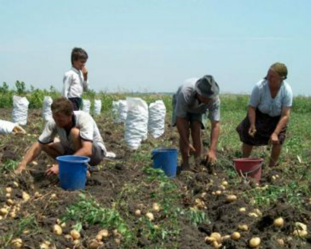 Sprijin suplimentar pentru fermierii afectați de secetă