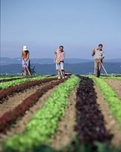 Campania-agricola-de-primavara-a-intrat-in-linie-dreapta