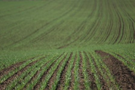 teren_agricol_2_
