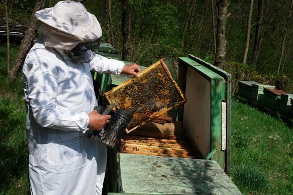 Regulile pe care trebuie să le știe atât apicultorii, cât și agricultorii, în privința folosirii pesticidelor