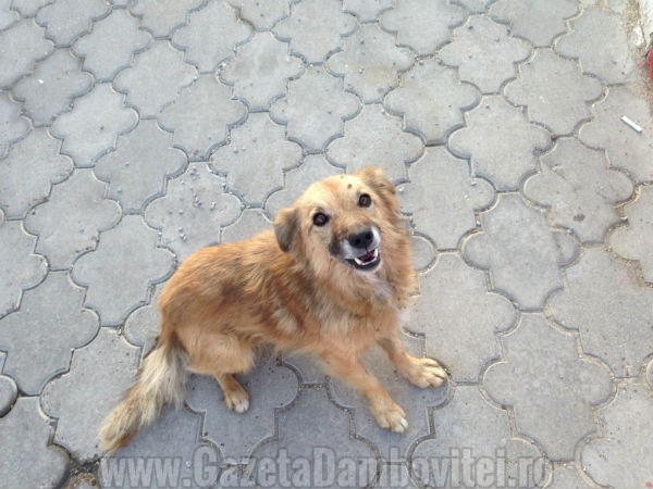 caine-adoptie-targoviste1
