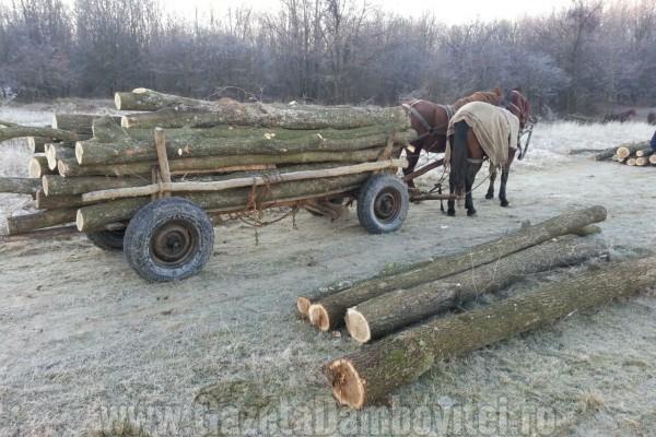 Bravo! Jandarmii au prins hoții de lemne care terorizaseră Ocolul Moreni