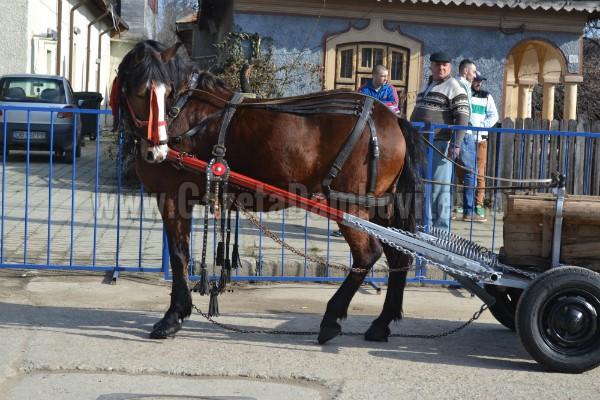 pastele cailor targoviste 13