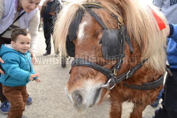 ponei (3)