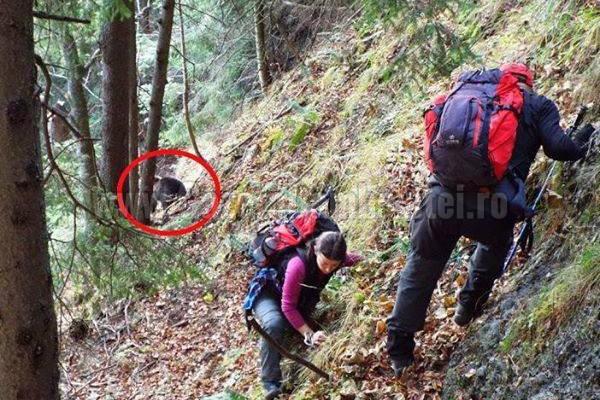WOW! Uite cu cine s-au întâlnit niște turiști în Bucegi!