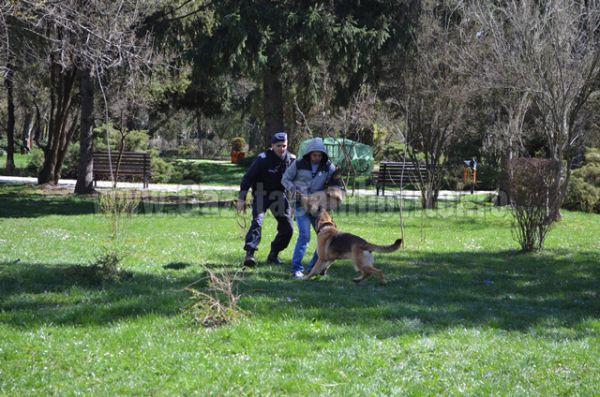jandarmi parc (6)