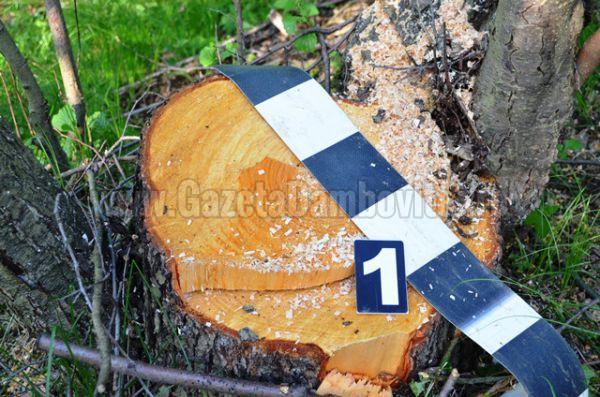lemn furat (10)