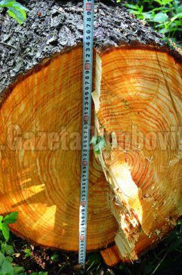 lemn furat (2)