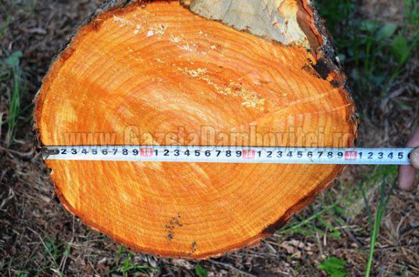 lemn furat (3)