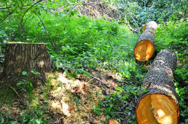 lemn furat (4)