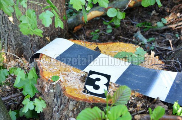 lemn furat (5)