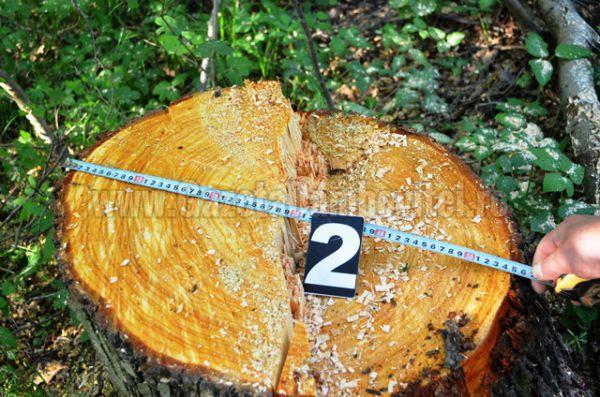lemn furat (6)