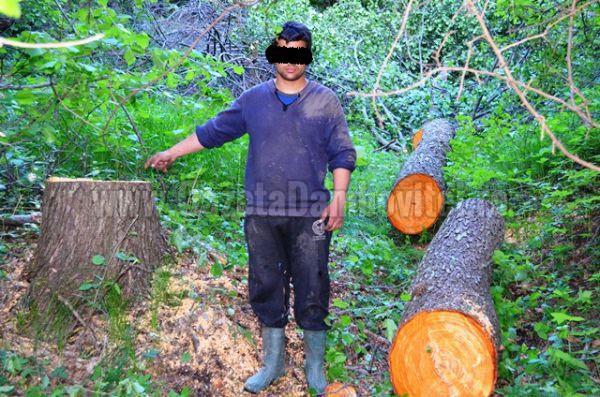 lemn furat (7)