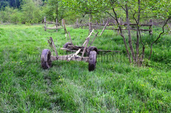 lemn furat (8)