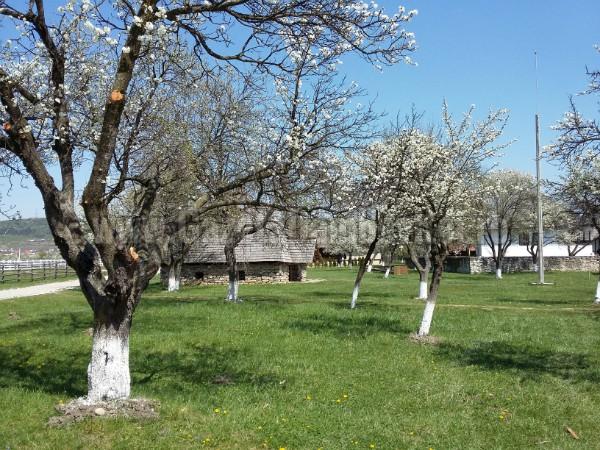 muzeul vinului (1)