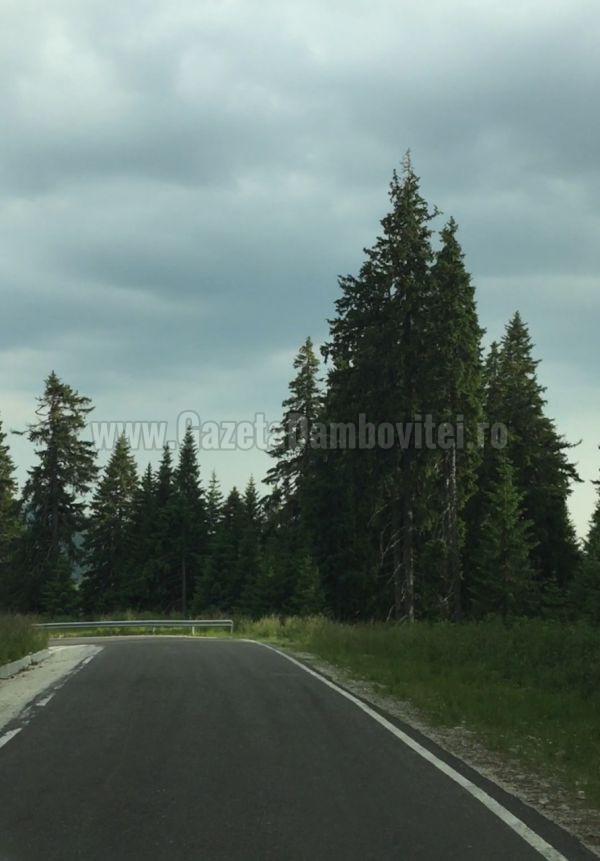 asfalt munte (3)
