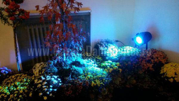 crizantema 2015 (13)_800x450