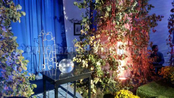 crizantema 2015 (3)_800x450