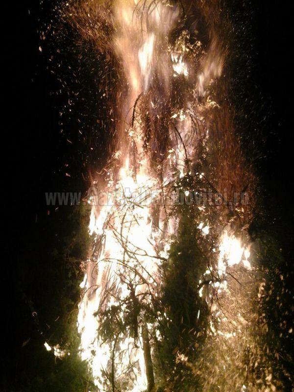 foc pucheni (1)