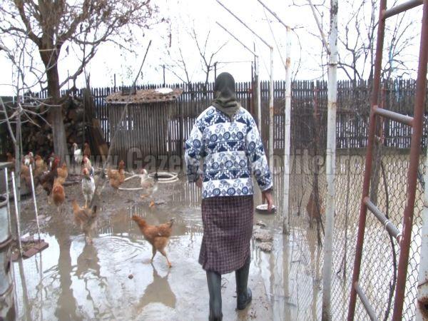 inundatii ilfoveni (12)