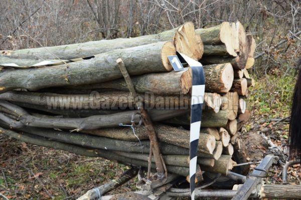 jandarmi lemne (2)