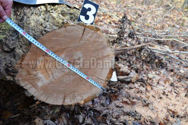 jandarmi lemne (5)
