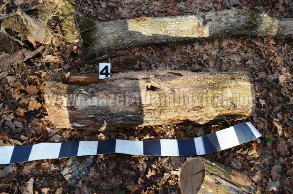 jandarmi lemne (6)