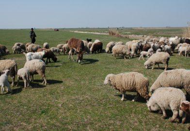 Cioban găsit mort în zona Tătaru, din Bucegi. Bărbatul era dispărut de sâmbătă