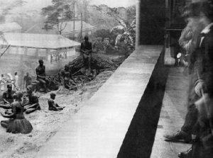 gradini zoo umane (2)
