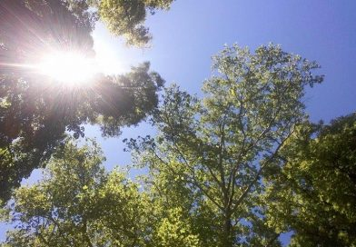 Târgoviște: Săptămâna începe cu vreme frumoasă și temperaturi ridicate