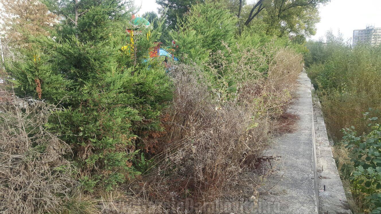Malul betonat al râului Cricov - zona unde a căzut copilul