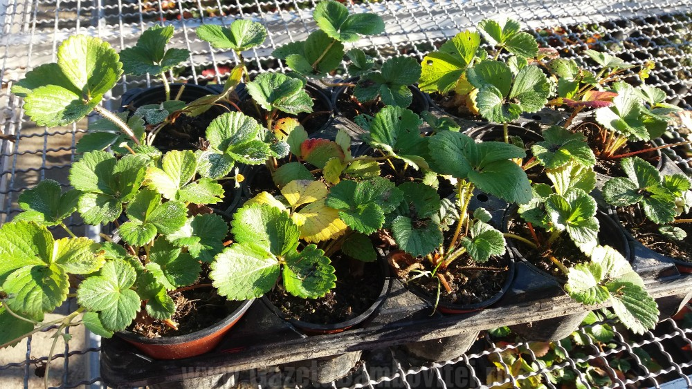 depozitului-de-flori-si-plante-ornamentale-ecoalpiflora-targoviste-1