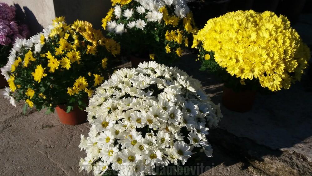 depozitului-de-flori-si-plante-ornamentale-ecoalpiflora-targoviste-3