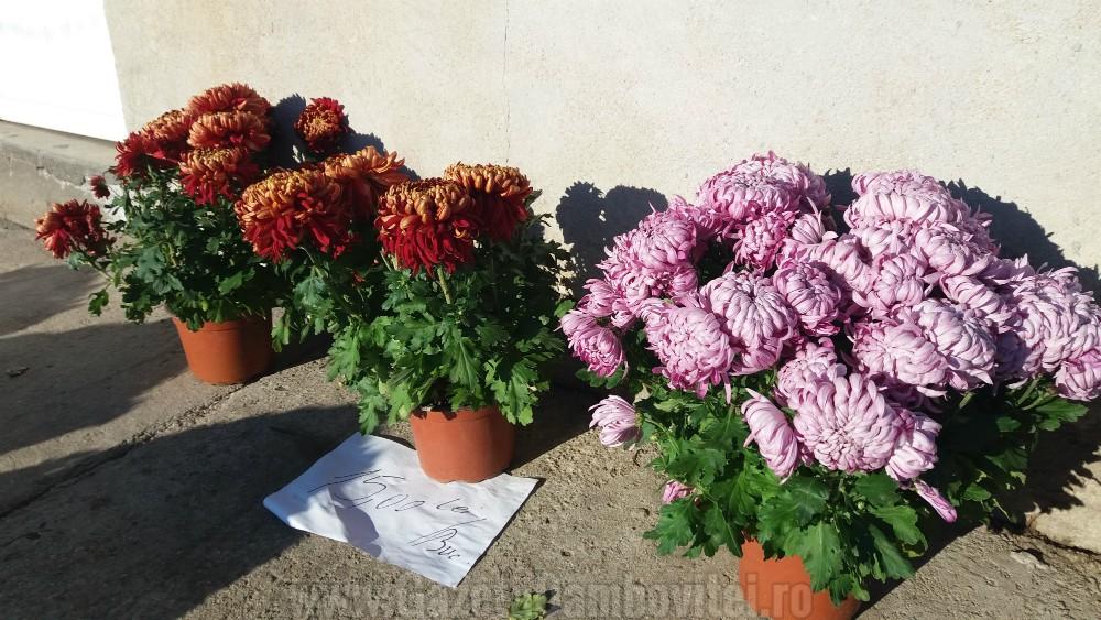 depozitului-de-flori-si-plante-ornamentale-ecoalpiflora-targoviste-4