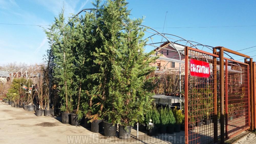 depozitului-de-flori-si-plante-ornamentale-ecoalpiflora-targoviste-6