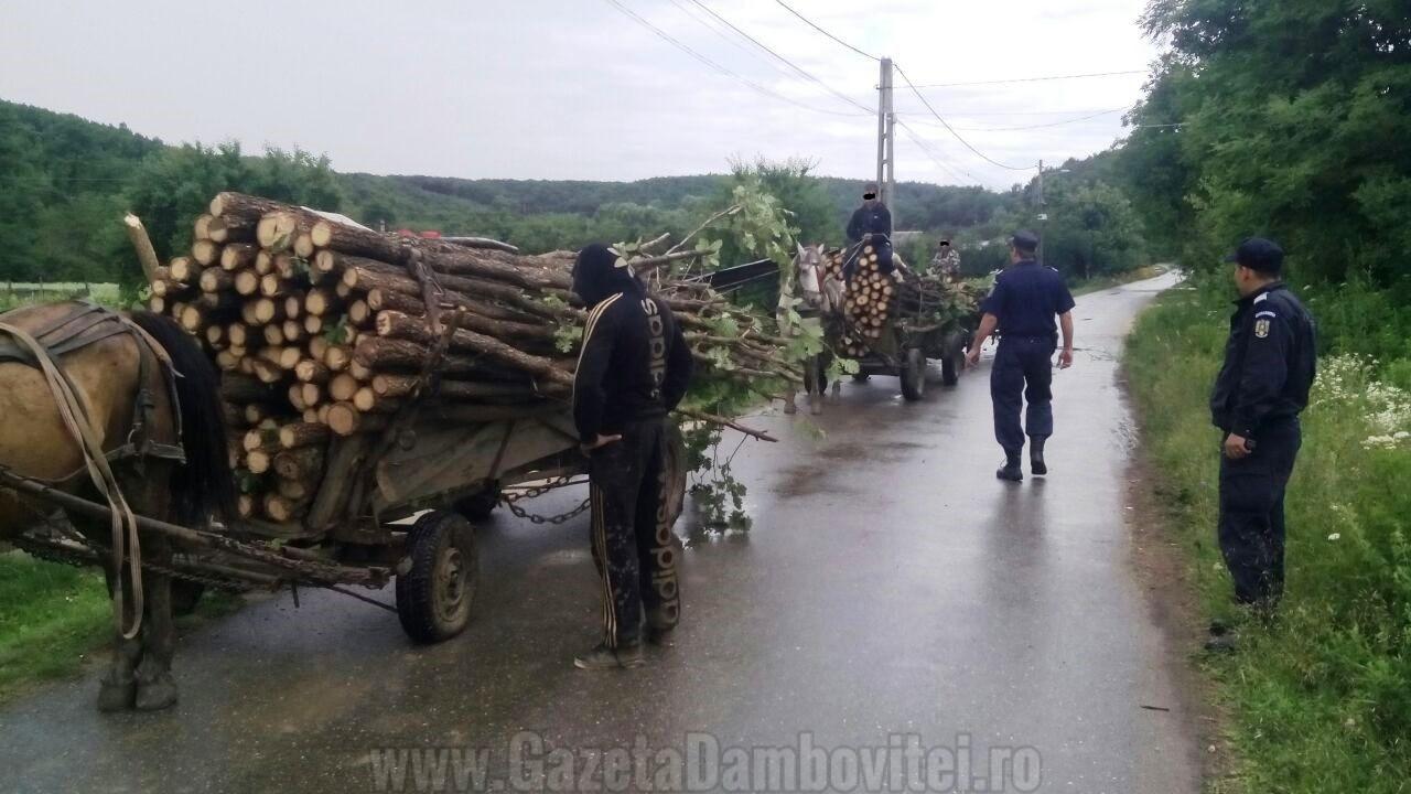 DÂMBOVIŢA: Zeci de acţiuni ale jandarmilor, de la începutul anului, împotriva hoţilor de lemne