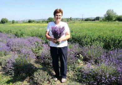 Târgovişteanca Gina Brătescu a renunţat la cultura de legume pentru cea de lavandă! Cum merge afacerea