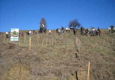 Voluntarii vor planta arbori pe 8 hectare la Șotânga! Detalii pentru cei care vor să participe la acţiune