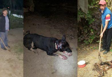 Ursul din zona Găești a început să atace câinii din gospodării! Oamenii sunt în alertă, înarmați cu furci și bâte