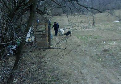 Bărbatul care a dat foc țarcului de câini de la Pucioasa a fost reținut de polițiști