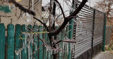 "DÂMBOVIȚA:  Fenomenul ""Freezing rain"" a încremenit județul – VIDEO"