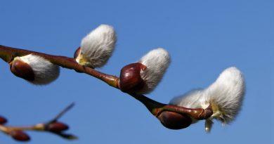 Pare că vine primăvara! Meteorologii anunță vreme caldă în perioada următoare