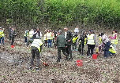Elevii din Mănești au ajutat Ocolul Silvic Sturzeni la reîmpădurirea unei zone