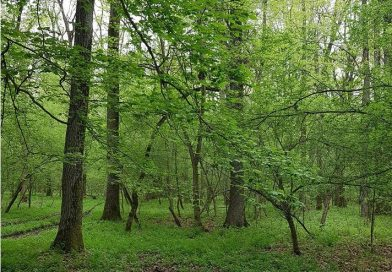 A început sesiunea a patra a schemei de ajutor de stat pentru împădurire