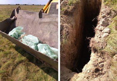 LUCIENI: Autoritățile au omorât și îngropat porcul rămas în gospodăria în care s-a confirmat pesta