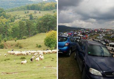 """""""Răvășitului oilor"""" a schimbat mentalitatea unei comunități! Oamenii s-au reîntors la păstorit"""