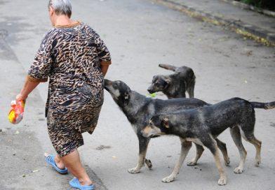 Doi câini luați de pe stradă, singura familie a femeii găsită moartă într-un apartament din Titu