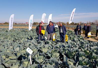 Agrosel a prezentat mai mulți hibrizi de varză, ameliorați în România, legumicultorilor din Lungulețu